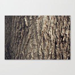 Tree Skin 2 /4 Canvas Print