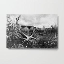 006 Metal Print