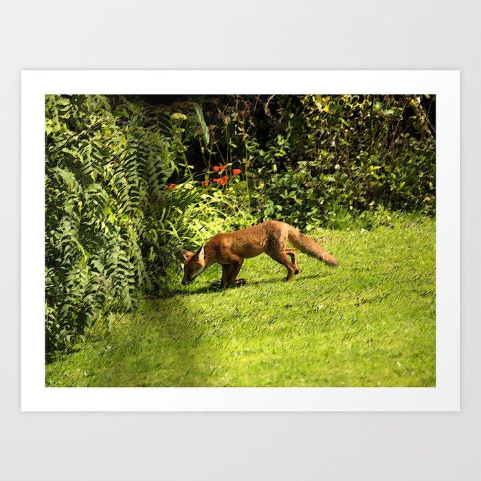 Fox on the prowl Art Print