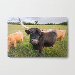 Highland Cow - Head Tilt Metal Print