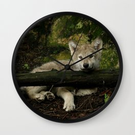 Timber wolf pup Wall Clock