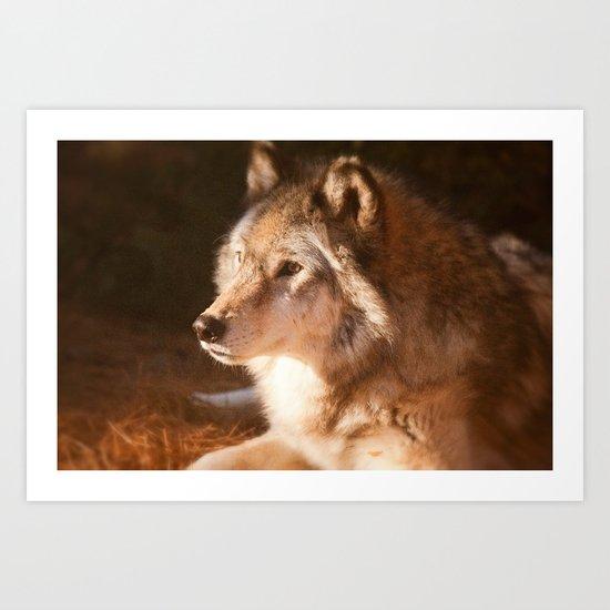 Wolf Beauty Art Print