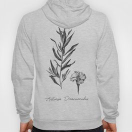 French Tarragon Botanical Illustration Hoody