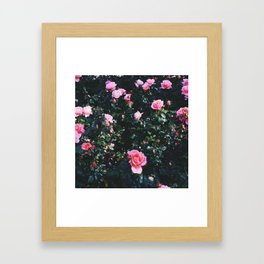 city of roses Framed Art Print