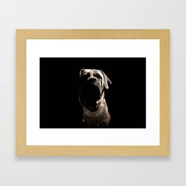 Dramatic Boerboel Framed Art Print