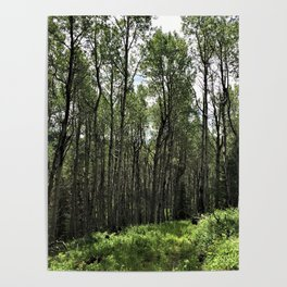 Among the Trees Poster