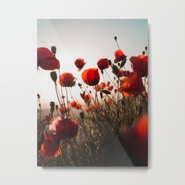Red Poppies In Field In Morning Light Remembrance day Metal Print