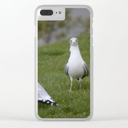 Pair of Seagulls Clear iPhone Case