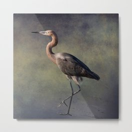 The Reddish Egret 1 Metal Print