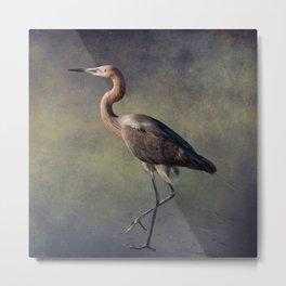 The Reddish Egret 1 Metal Print