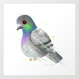 City Pigeon Bird Illustration  Art Print