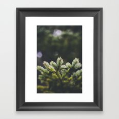 Spruce Framed Art Print