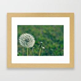 Dandy Dandelion Framed Art Print