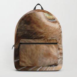 Ginger cat portrait Backpack