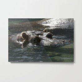 Philadelphia Zoo Series 19 Metal Print