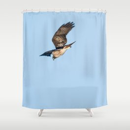 Bird - Red-Tailed Hawk - Study 1 Shower Curtain