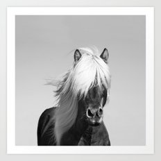 Portrait of a Horse in Scotish Highlands Art Print