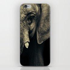 Elephant's face iPhone & iPod Skin