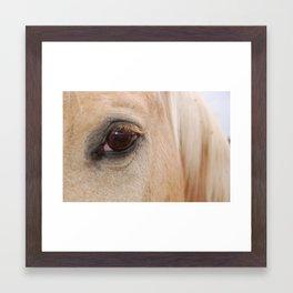 Palamino Eye Framed Art Print
