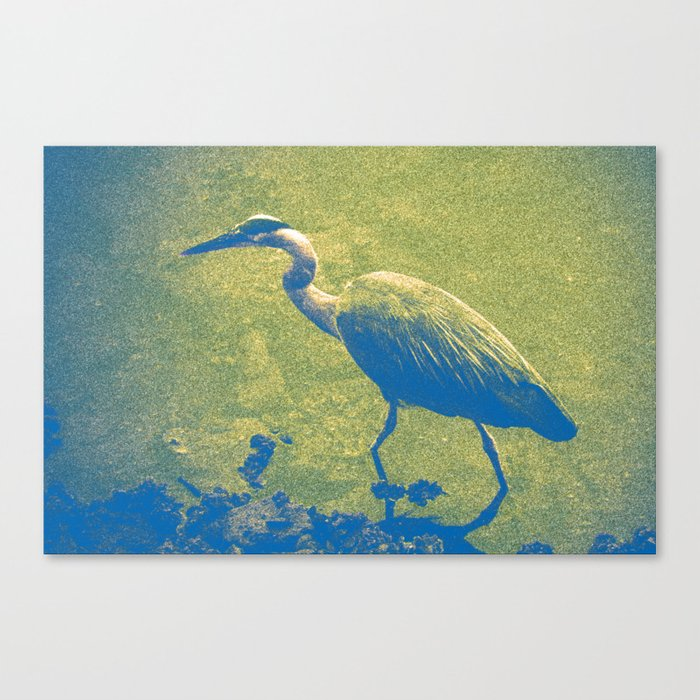 Blue (and Gold) Heron Canvas Print