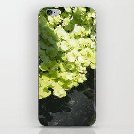 Longwood Gardens - Spring Series 262 iPhone Skin