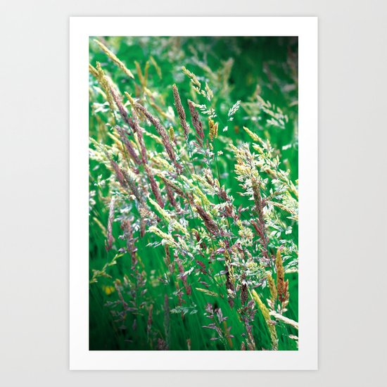 Colour Grasses Art Print