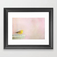 Little Pine Warbler Framed Art Print