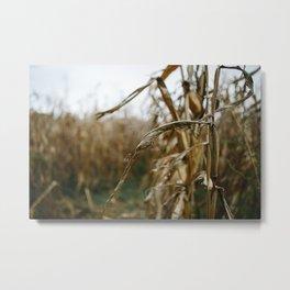 Autumn Cornstalk II Metal Print