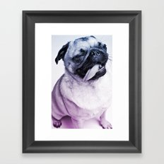 color pug Framed Art Print