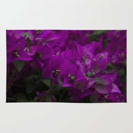 Bougainvillea. Flowers in the garden. Rug