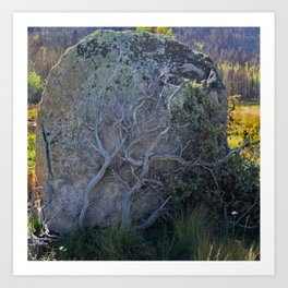 Bush Climbing up Rock Art Print