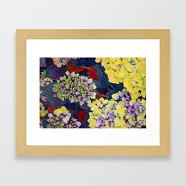 Hydrangea Yellow Framed Art Print