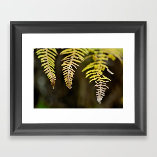 three ferns Framed Art Print