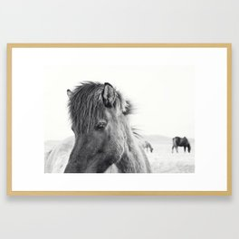 Horse Print | Modern and Black and White Framed Art Print