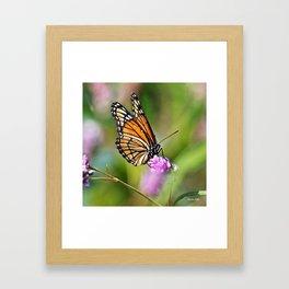 Viceroy Butterfly Framed Art Print
