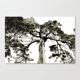 Crooked Tree Canvas Print