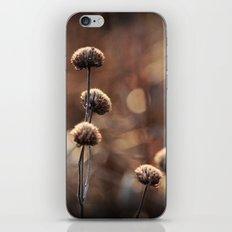 Copper Field Evening iPhone & iPod Skin