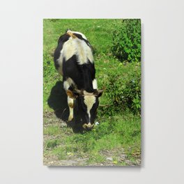 Cow in a Field Metal Print