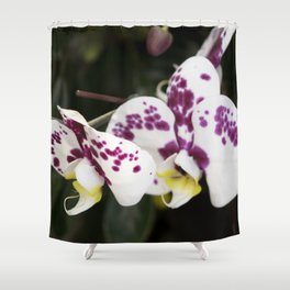 Longwood Gardens Orchid Extravaganza 24 Shower Curtain