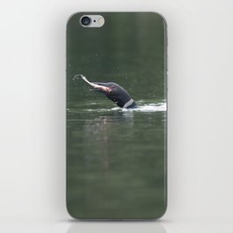 Loon swallowing a rainbow trout iPhone Skin