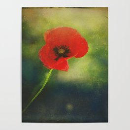 I found a Poppy Poster