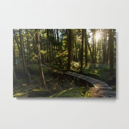 North Shore Trails in the Woods Metal Print