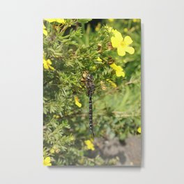 Dragonfly on Yellow Flowers Metal Print