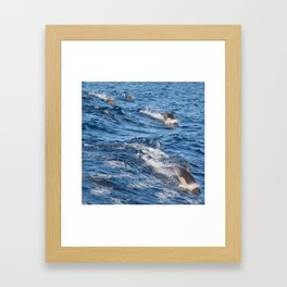 Dolphins Up and Down Framed Art Print