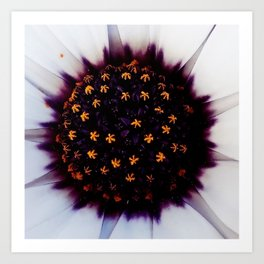 just a flower detail Art Print