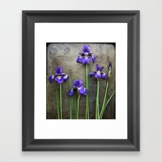 How My Iris Grow - Purple  Framed Art Print