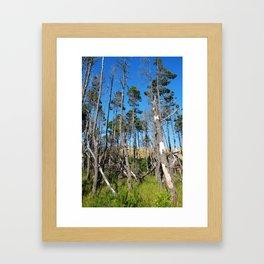 Beach Trees Framed Art Print