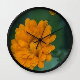 Orange Zinnia after the rain Wall Clock