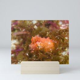 Adorably angry orange cuttlefish Mini Art Print