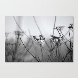 Natural Mist Canvas Print